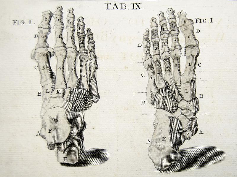 voet anatomie 2 Ruimte in je voeten is ruimte in je hele lijf